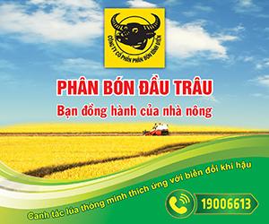 cty-cp-phan-bon-binh-dien-3-tuan-talk-2210