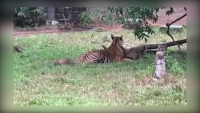 VinPearl Safari Phú Quốc – 17 ngày đón 2 cá thể tê giác quý chào đời